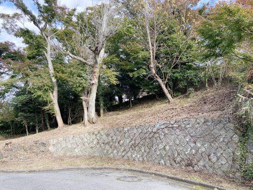 道路(西側)から土地を見る